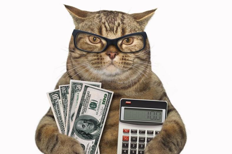 Finance Cat