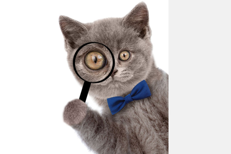 Cat with magnifying glass
