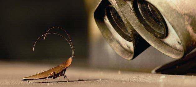 The only nice looking cockroach we could find, from Pixar's WALL-E.